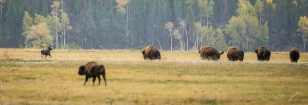 Moose-01-2013