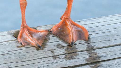 3 - Feets