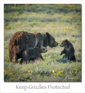 170710 Protect Grizzlies