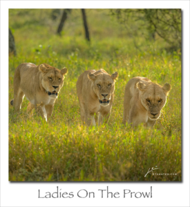190415 Ladies On The Prowl