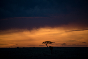 AP-Sunset Tree