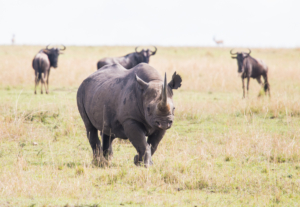 AP-Rhino 6