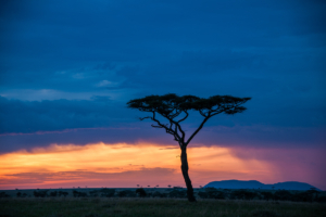 AP-Sunset Serengeti 2