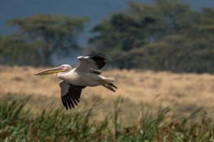 Andrew-Birds in Flight-3