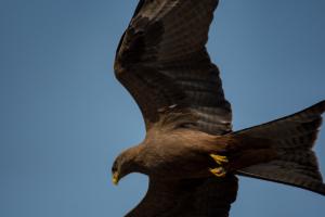 Andrew-Birds in Flight-4