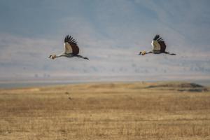 Andrew-Birds in Flight-6