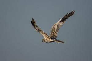 Andrew-Birds in Flight-7