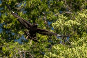 Andrew-Birds in Flight