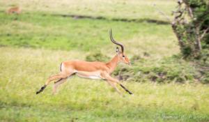 JW-Impala