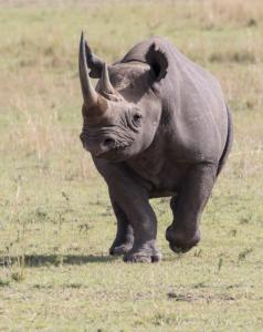 JW-Rhino charging