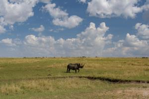 JB-Big Sky Rhino