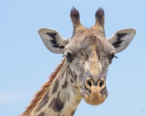JB-Giraffe Portrait