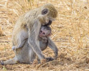 JB-Monkey Mother & Child