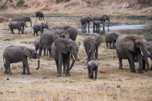 MWC-Elephant family