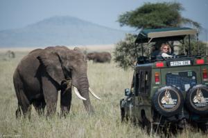 MWC-Elephant near jeep