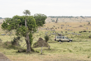 MWC-Jeep in Serengeti