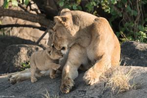 MWC-Lioness, I love you mum