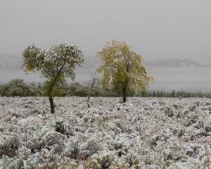 Scoles Winter Before Fall DSC 6701