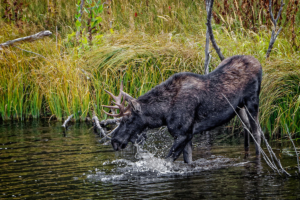 jtmcg Grand Teton 2017-4-2