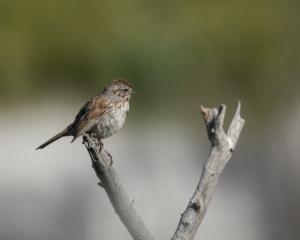 JP-Sparrow