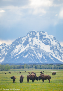 JW-Best of Tetons (16 of 38)