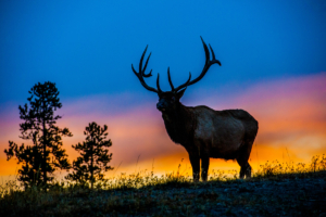 Andy Phan-Elk with the sunset 8