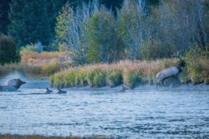 Andy Phan-The Elks crossing river 1