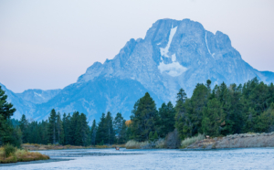 Andy Phan-The MT Teton with a couple elk 1