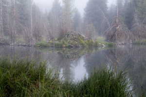 LR-beaver lodge