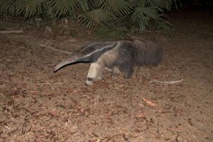 anteater b-denoise-adjust-sharpen