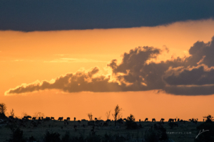 SERENGETI SUNSET-5004396