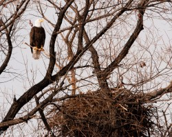 Glen Walls-Staking a Claim Lower Klamath NWR